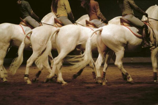 2021 programme – Zingaro Theatre & The Equestrian Academy of Versailles